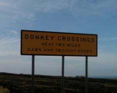 DonkeyCrossing11.jpg